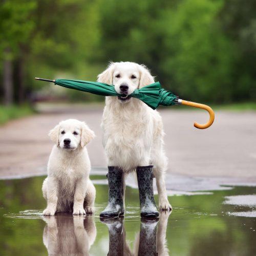 protegermascota