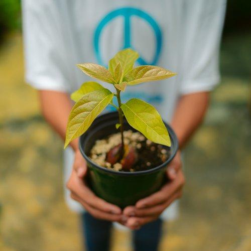 Mano de niño sujetando una planta